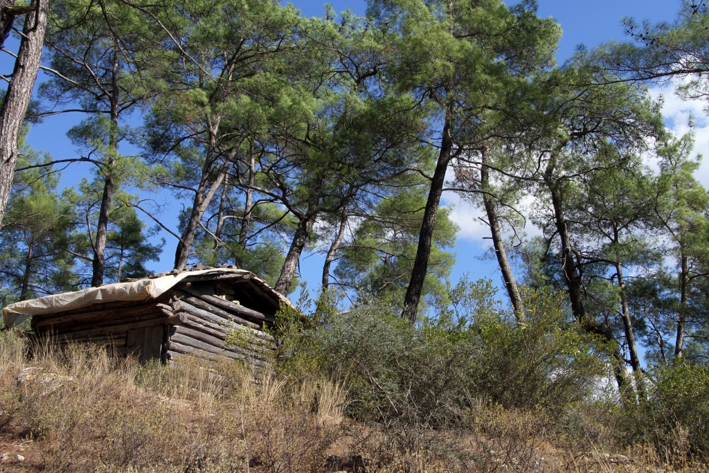 Small wooden hut and pine trees in Turkey